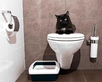 Хигиена на котката