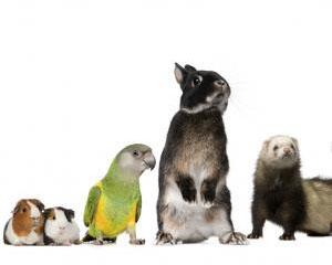 Птици и гризачи