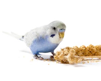Храни за птици