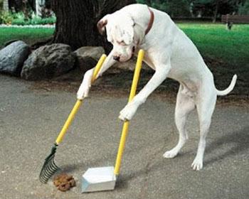 Хигиена на кучето