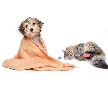 Козметика за кучета и котки
