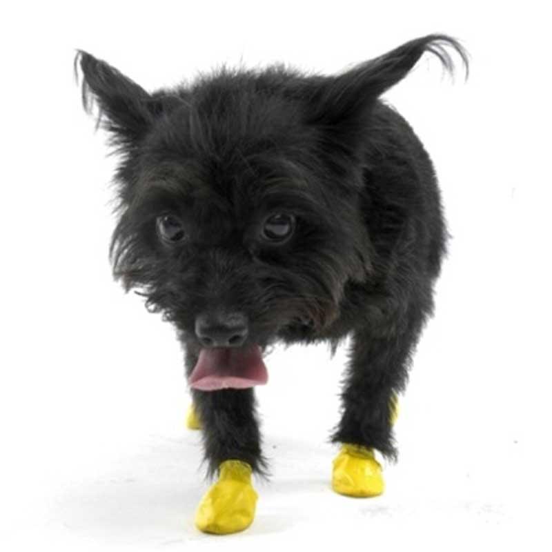 Pawz XXSmall Yellow - каучукова водоустойчива обувка за кучета с дължина налапата до 3см 1бр